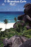 kt2817, photo of palm trees and rocks in the Seychelles, exotic island paradise