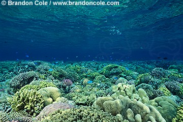lq8470. The coral reef, one of nature's richest realms.