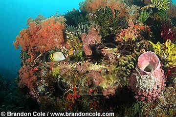 nm0264-D. healthy coral reef with soft corals, sponges, crinoids, fish. Indonesia