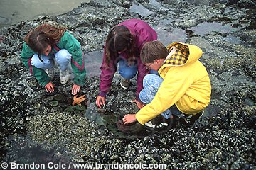 jz11407. children explore tidal pools during low tide.  Model Released.