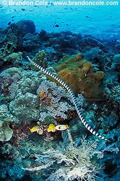 Giant underwater snake - photo#25